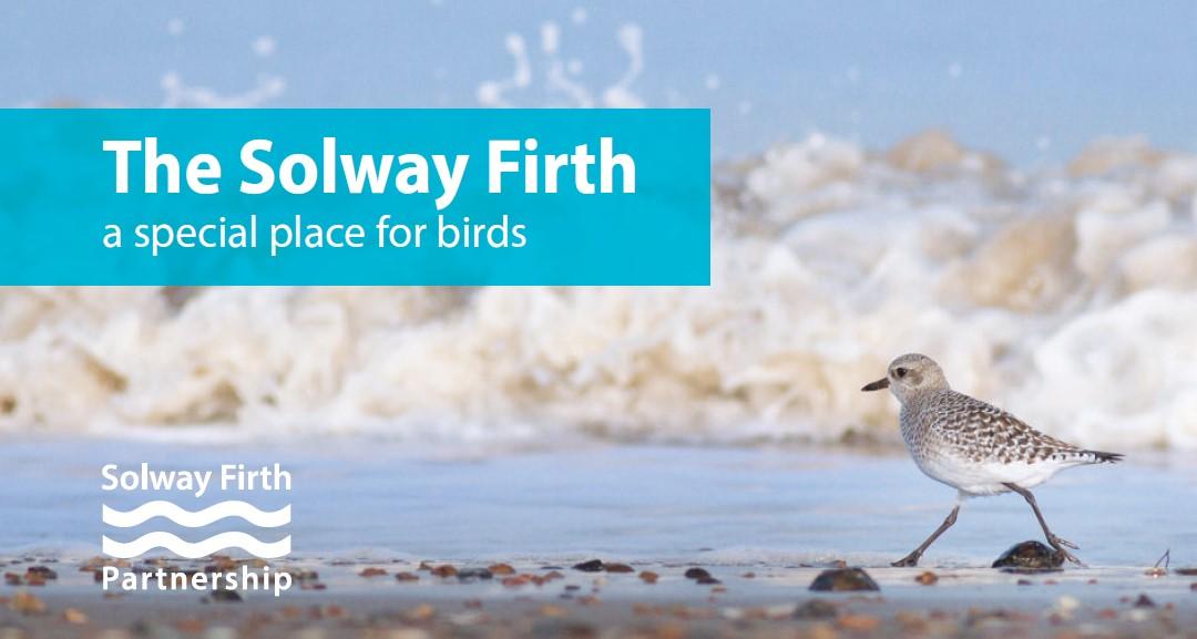 Solway Bird Guide