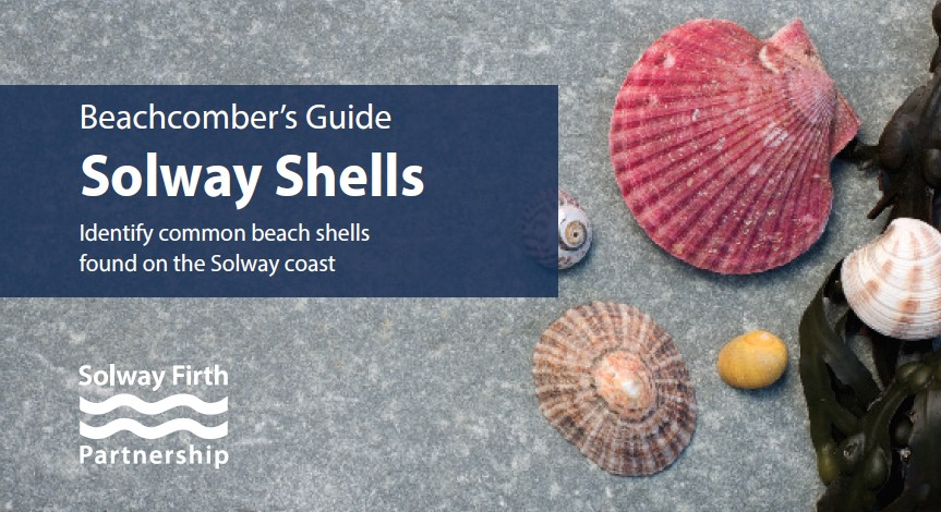 Solway Shell Guide
